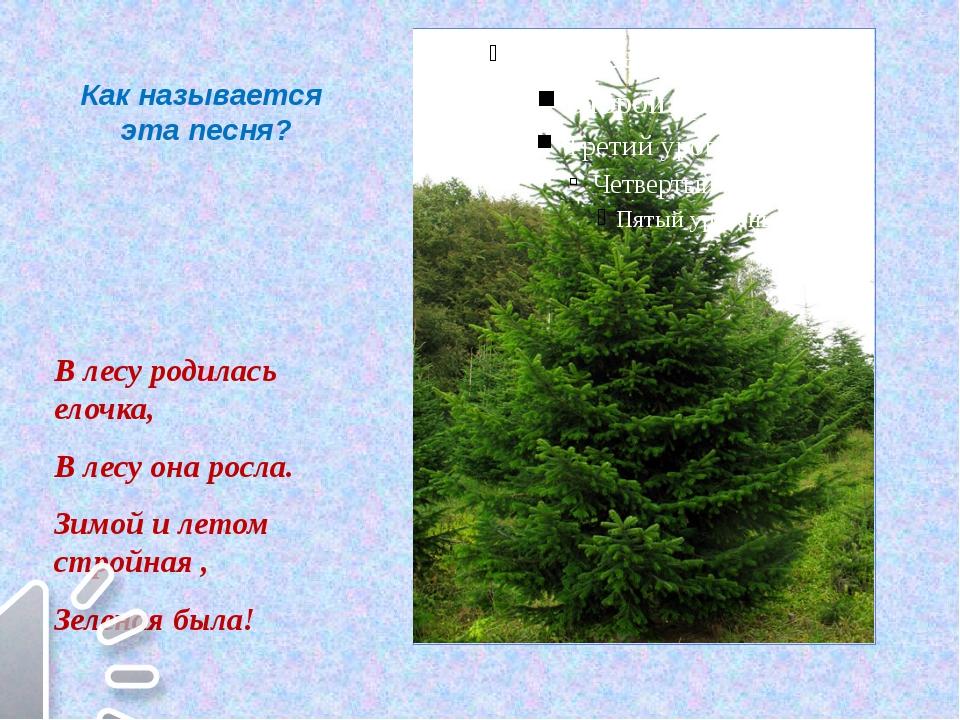 Как называется эта песня? В лесу родилась елочка, В лесу она росла. Зимой и л...