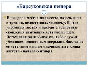 «Барсуковская пещера В пещере имеется множество лазеек, ниш и трещин, недосту