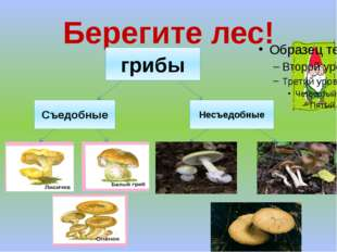 Берегите лес! грибы Съедобные Несъедобные