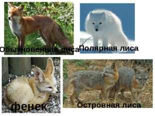Обыкновенная лиса Полярная лиса Островная лиса фенек
