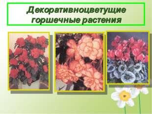 Декоративноцветущие горшечные растения