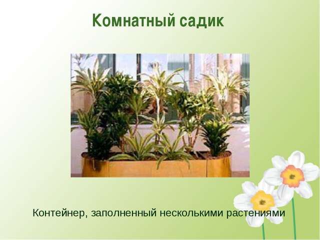Комнатный садик Контейнер, заполненный несколькими растениями