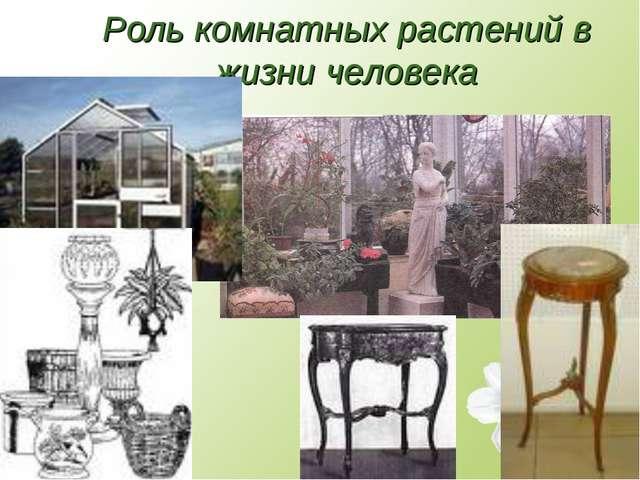 Роль комнатных растений в жизни человека