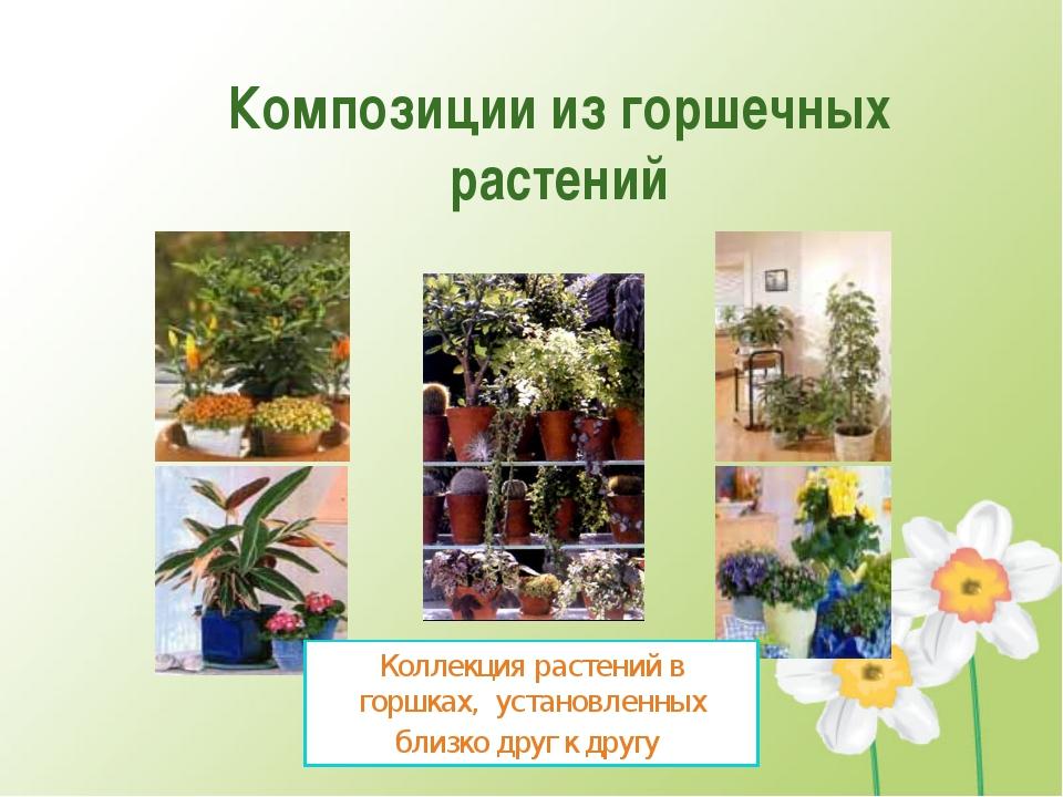 Композиции из горшечных растений Коллекция растений в горшках, установленных...
