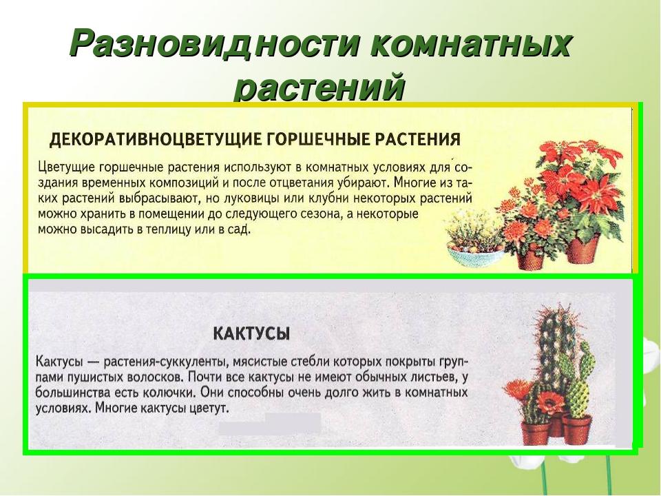 Проект на тему комнатные растения в интерьере