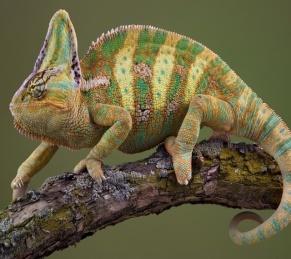 Обои Рептилии Животные Фото 270632