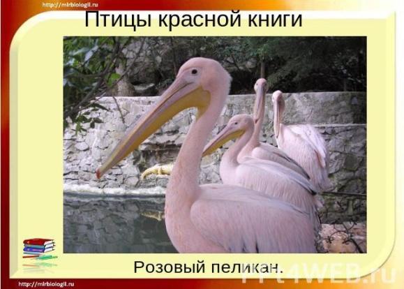 hello_html_m288e2a26.jpg