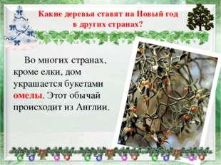 Во многих странах, кроме елки, дом украшается букетами омелы. Этот обычай пр