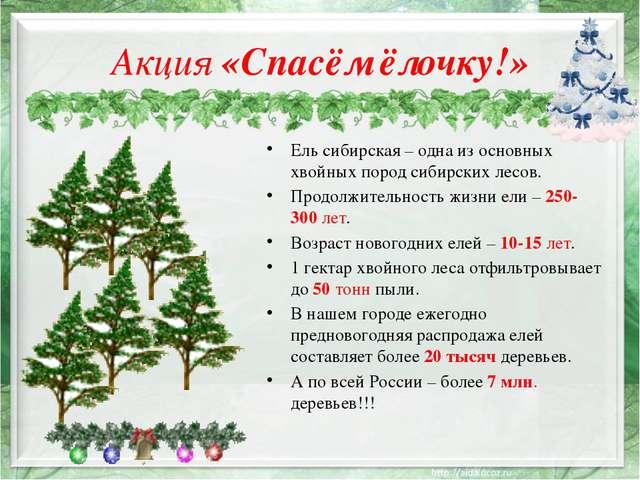 Акция «Спасём ёлочку!» Ель сибирская – одна из основных хвойных пород сибирск...