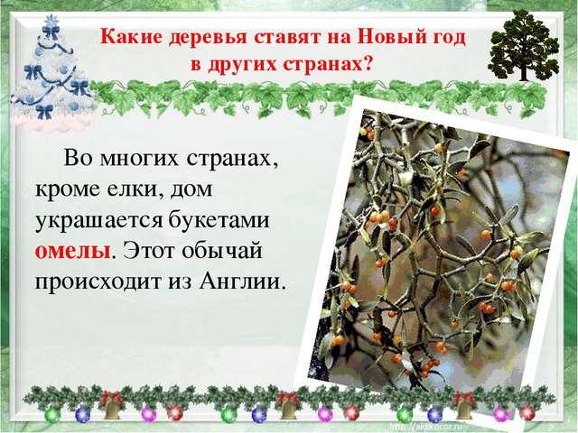Во многих странах, кроме елки, дом украшается букетами омелы. Этот обычай пр...