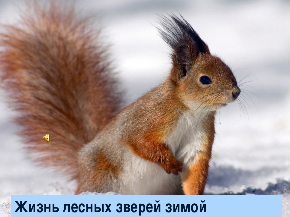 Жизнь лесных зверей зимой