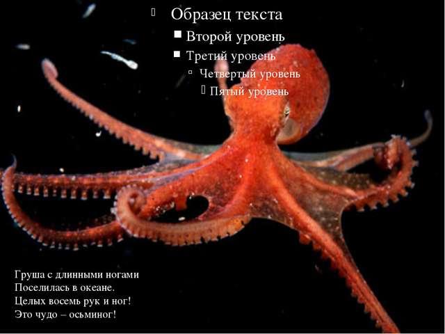 Груша с длинными ногами Поселилась в океане. Целых восемь рук и ног! Это чуд...