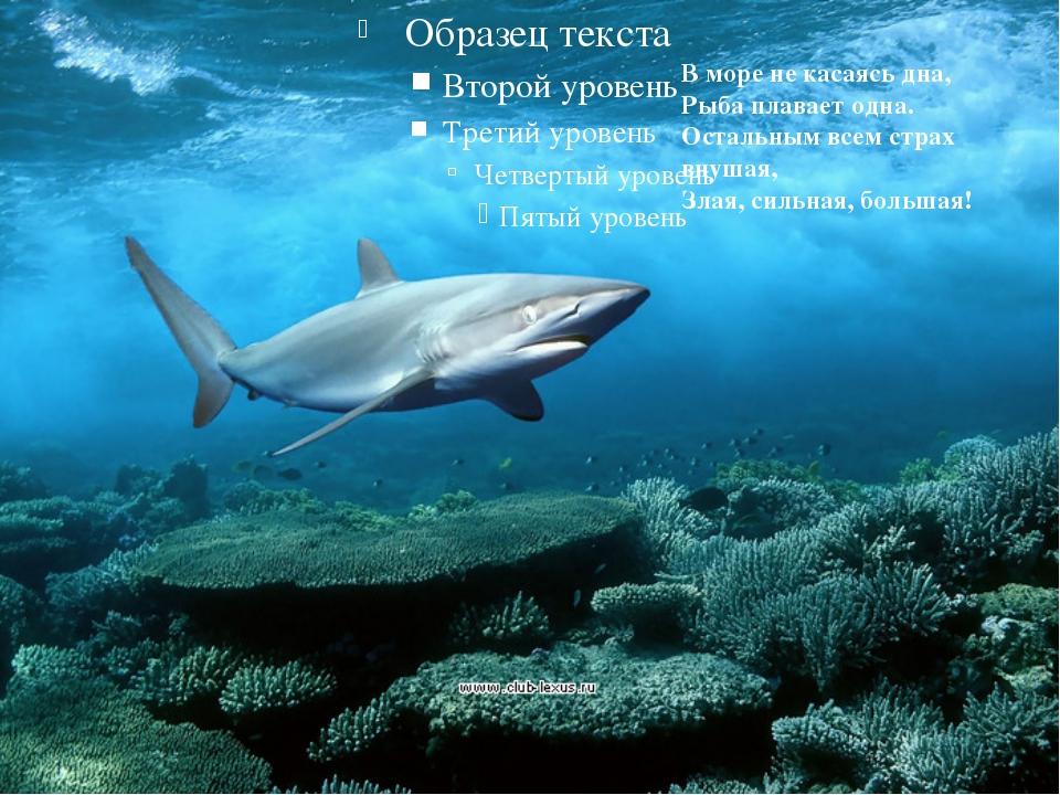 В море не касаясь дна, Рыба плавает одна. Остальным всем страх внушая, Злая,...