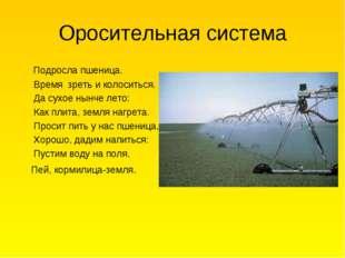 Оросительная система Подросла пшеница. Время зреть и колоситься. Да сухое нын