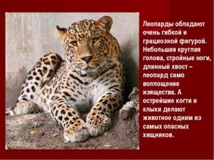 Леопарды обладают очень гибкой и грациозной фигурой. Небольшая круглая голова