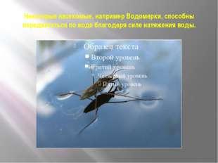 Некоторые насекомые, например Водомерки, способны передвигаться по воде благо