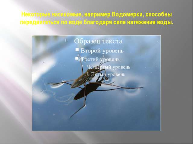 Некоторые насекомые, например Водомерки, способны передвигаться по воде благо...
