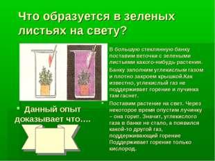 Что образуется в зеленых листьях на свету? Данный опыт доказывает что…. В бол