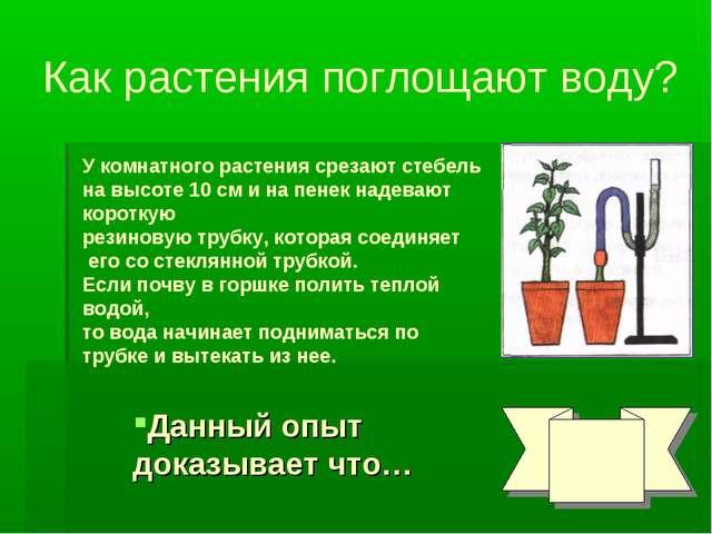Как растения поглощают воду? У комнатного растения срезают стебель на высоте...
