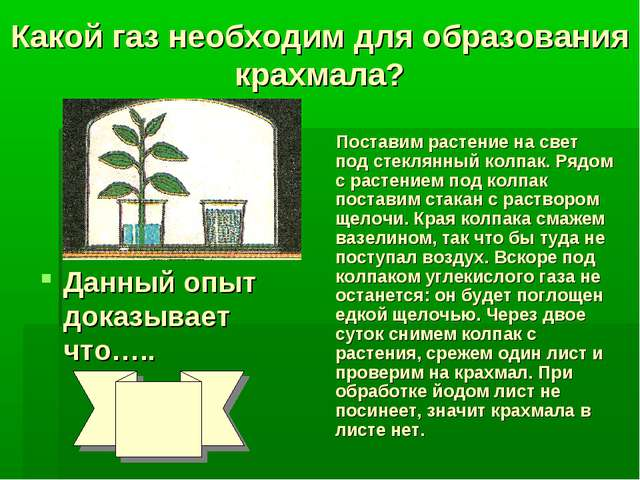 Какой газ необходим для образования крахмала? Поставим растение на свет под с...