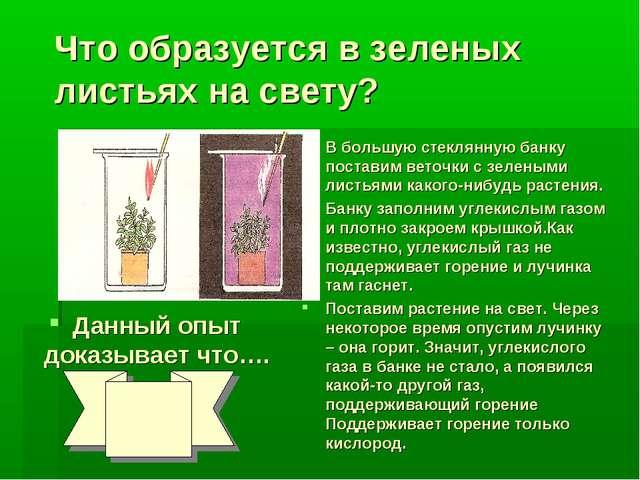 Что образуется в зеленых листьях на свету? Данный опыт доказывает что…. В бол...