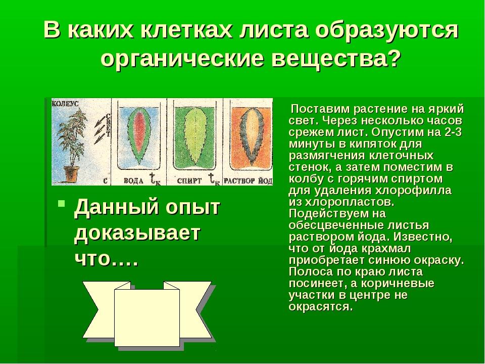 В каких клетках листа образуются органические вещества? Поставим растение на...