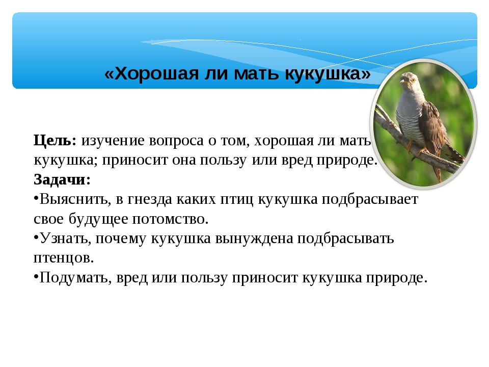 «Хорошая ли мать кукушка» Цель: изучение вопроса о том, хорошая ли мать кукуш...