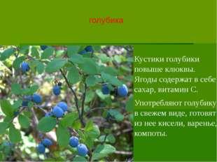 голубика Кустики голубики повыше клюквы. Ягоды содержат в себе сахар, витамин