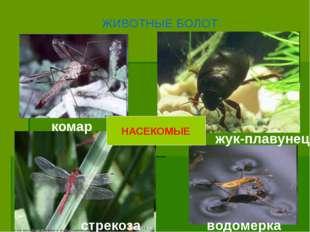 ЖИВОТНЫЕ БОЛОТ НАСЕКОМЫЕ водомерка комар стрекоза жук-плавунец
