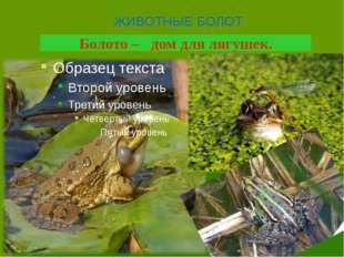Болото – дом для лягушек. ЖИВОТНЫЕ БОЛОТ