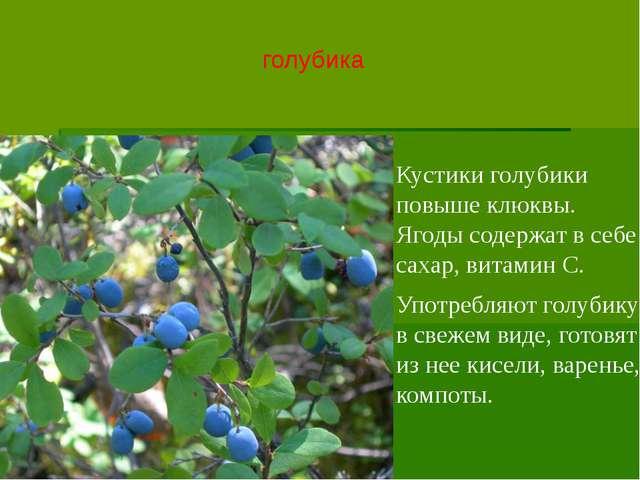 голубика Кустики голубики повыше клюквы. Ягоды содержат в себе сахар, витамин...
