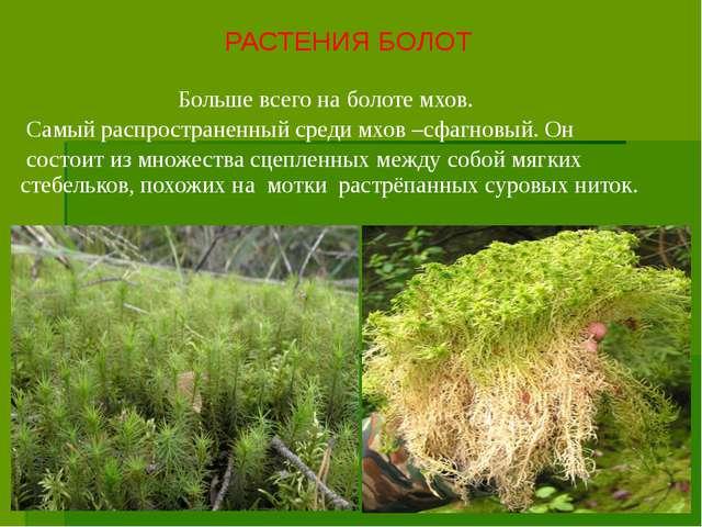 Больше всего на болоте мхов. Самый распространенный среди мхов –сфагновый. О...