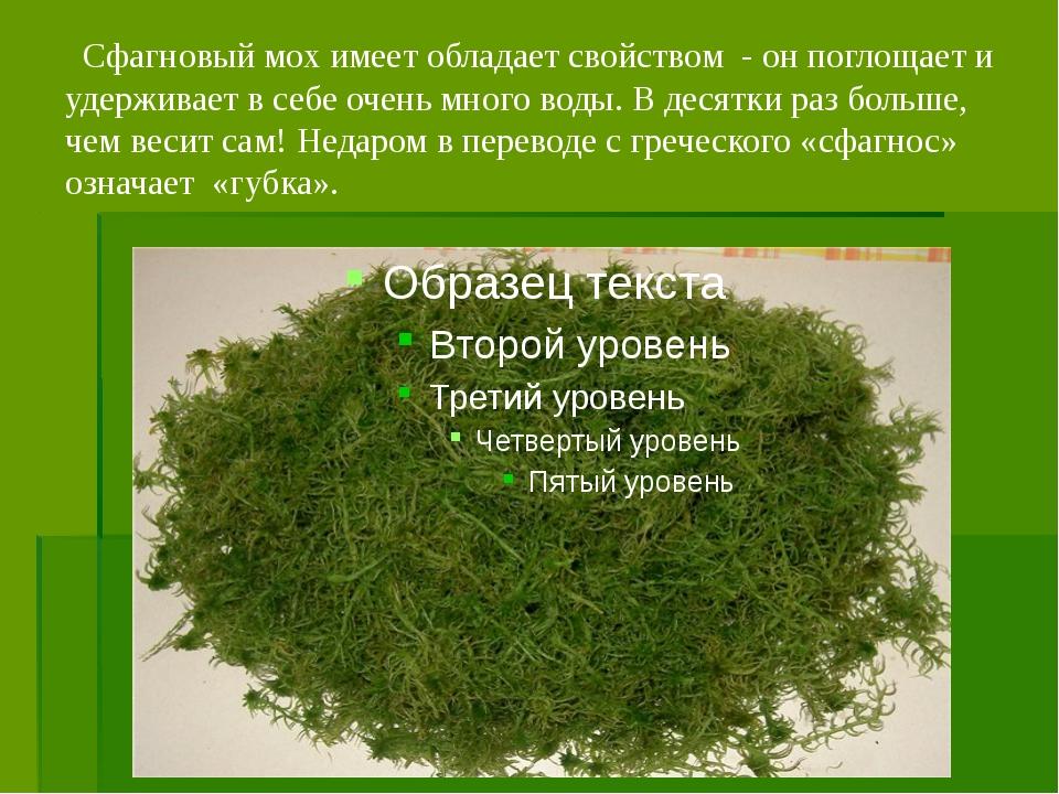 Сфагновый мох имеет обладает свойством - он поглощает и удерживает в себе оч...