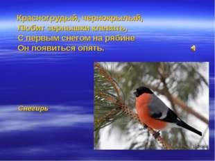 Красногрудый, чернокрылый, Любит зернышки клевать, С первым снегом на рябине