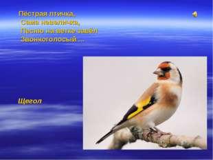 Пёстрая птичка, Сама невеличка, Песню на ветке завёл Звонкоголосый ... Щегол
