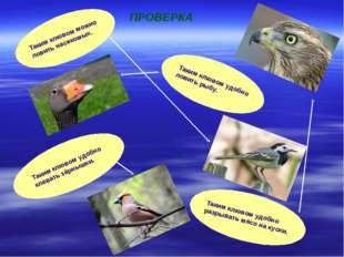 Таким клювом можно ловить насекомых. Таким клювом удобно ловить рыбу. Таким к