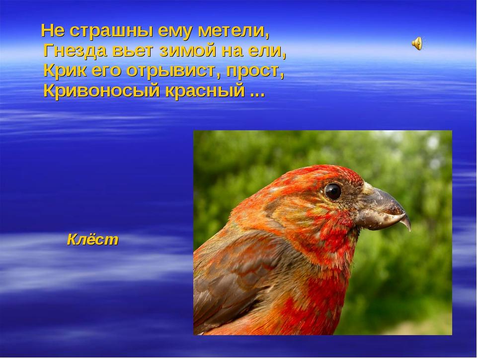Не страшны ему метели, Гнезда вьет зимой на ели, Крик его отрывист, прост, К...