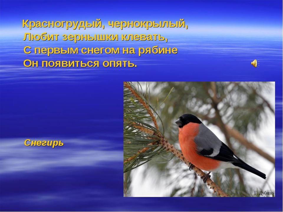 Красногрудый, чернокрылый, Любит зернышки клевать, С первым снегом на рябине...