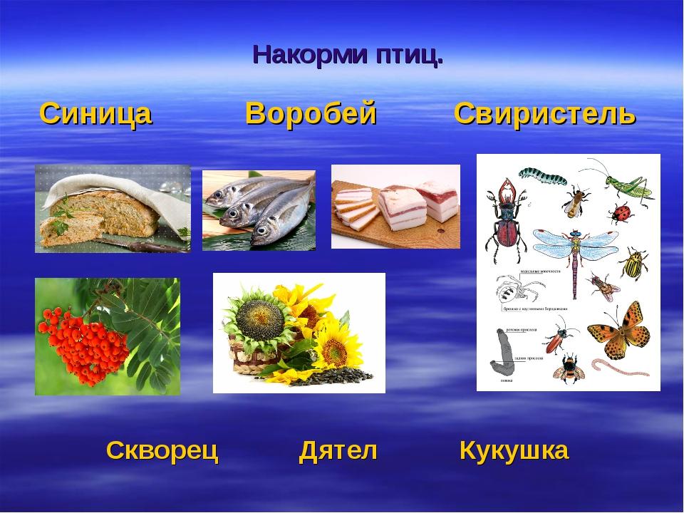 Синица Воробей Свиристель Скворец Дятел Кукушка Накорми птиц.