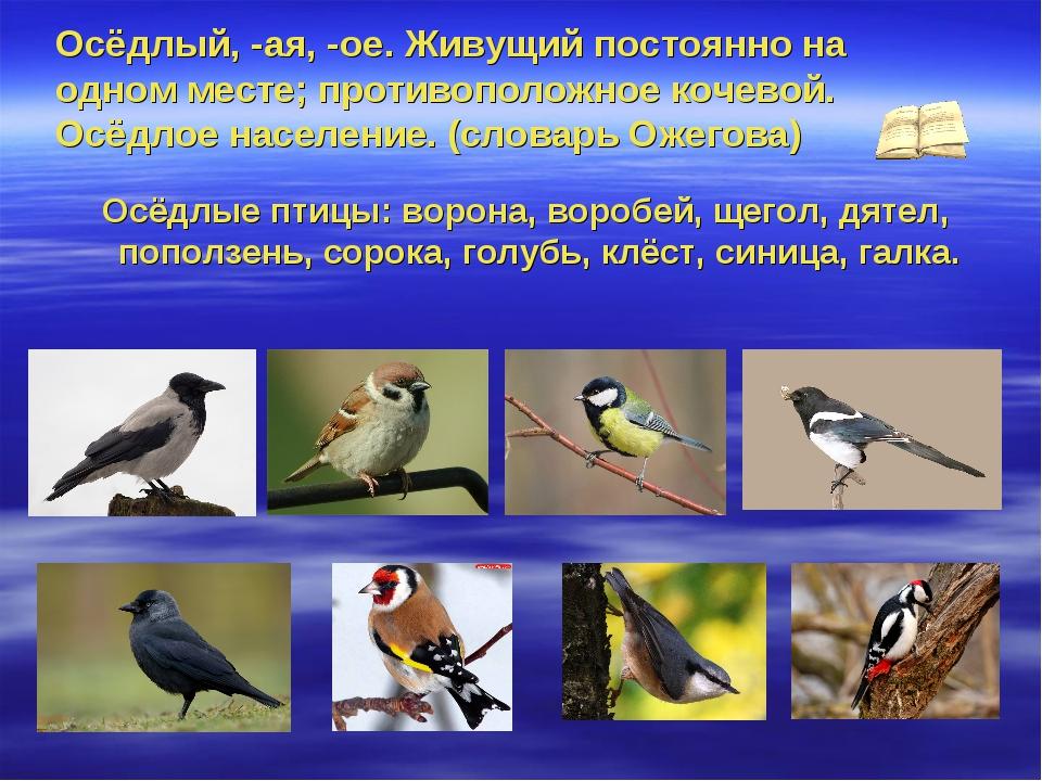 вытекают какие птицы обитают в алтайском мужское