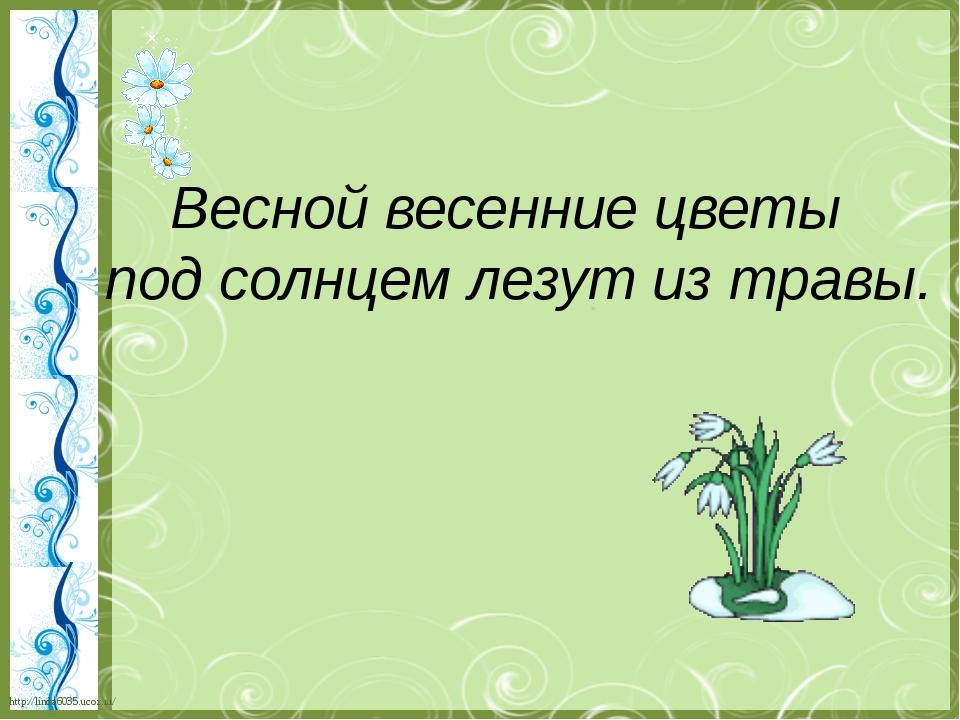 Весной весенние цветы под солнцем лезут из травы. http://linda6035.ucoz.ru/