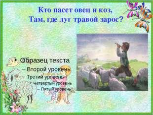 Кто пасет овец и коз,  Там, где луг травой зарос?