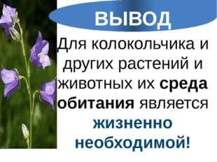 Для колокольчика и других растений и животных их среда обитания является жизн