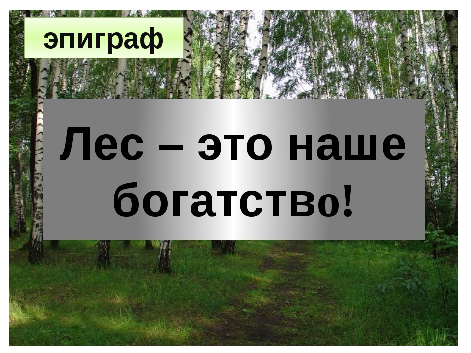 Лес – это наше богатство! эпиграф