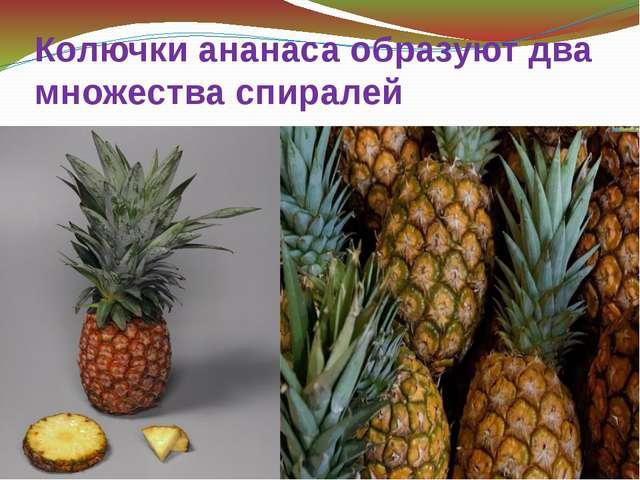Колючки ананаса образуют два множества спиралей