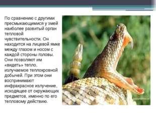 По сравнению с другими пресмыкающимися у змей наиболее развитый орган теплов