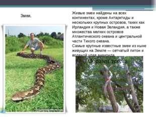 Змеи. Живые змеи найдены на всех континентах, кроме Антарктиды и нескольких к