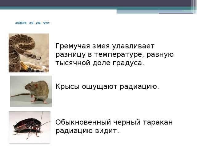ЗНАЕТЕ ЛИ ВЫ, ЧТО: Гремучая змея улавливает разницу в температуре, равную ты...