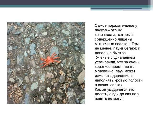 Самое поразительное у пауков – это их конечности, которые совершенно лишены м...