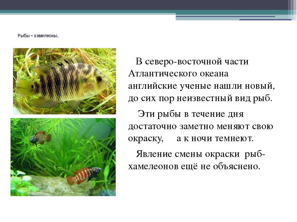 Рыбы – хамелеоны. В северо-восточной части Атлантического океана английские...
